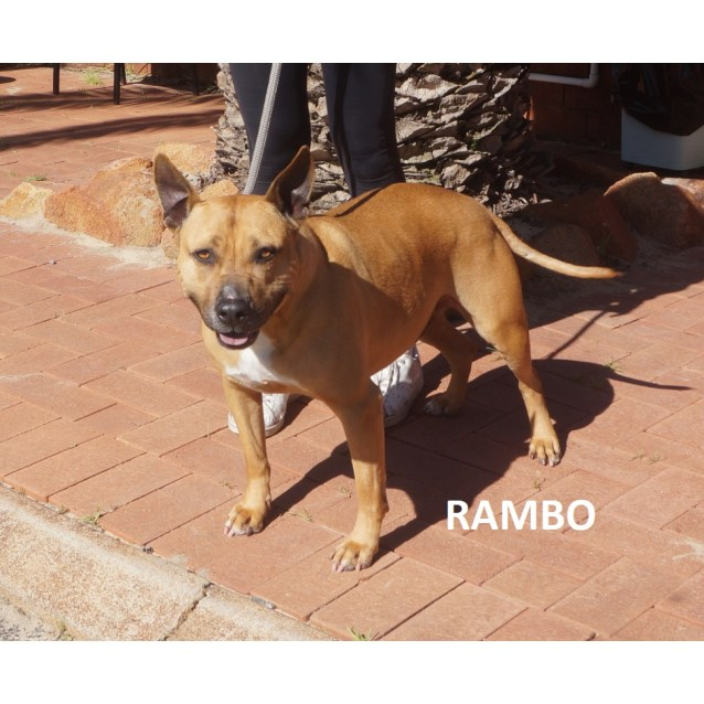 Photo of Rambo