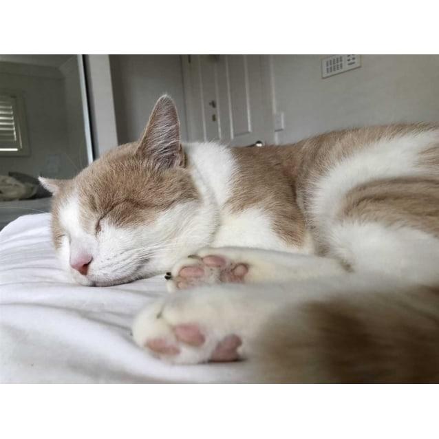 Photo of Winston