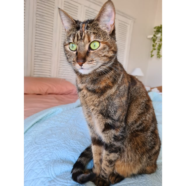 Photo of Arigato **2nd Chance Cat Rescue**