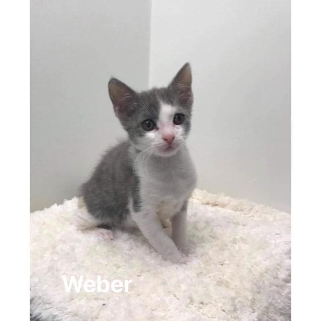 Photo of Weber