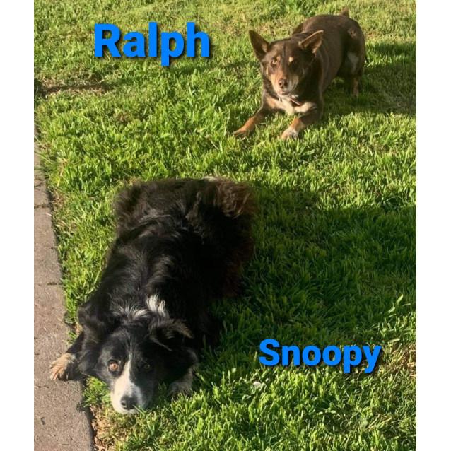 Photo of Snoopy Ralph