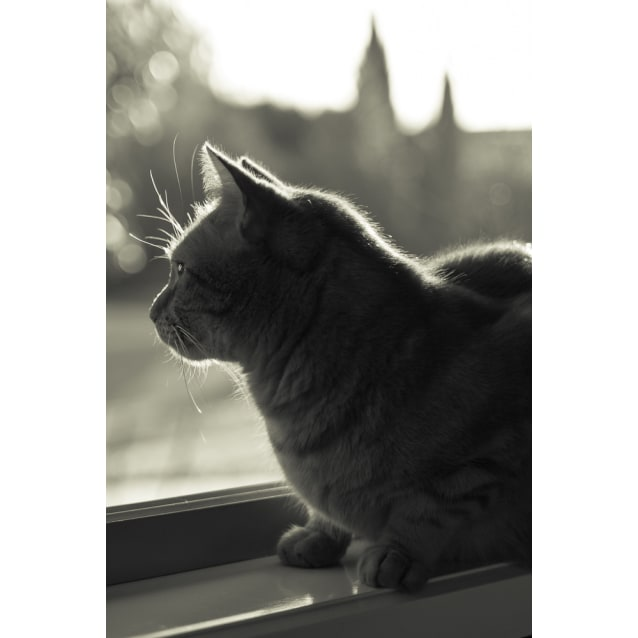 Photo of Gingerboy (Located In Brunswick)