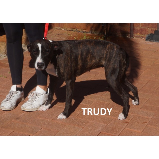 Photo of Trudy