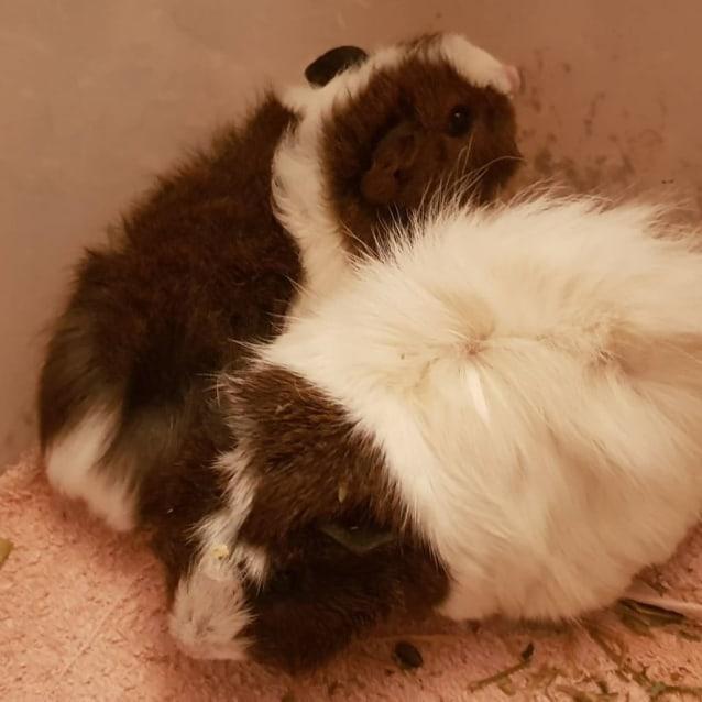 Photo of Whisper (Mum And Buddy Of Angel)