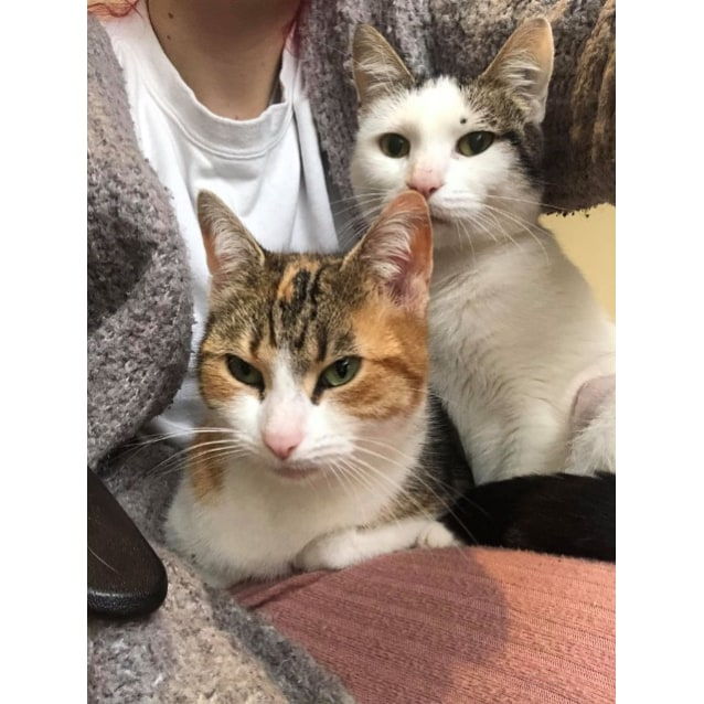 Photo of Lady And Zelda   Mother Daughter Duo!