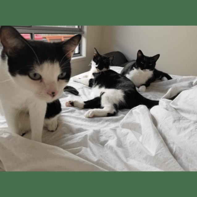 Photo of Oreo, Rose & Scarlett