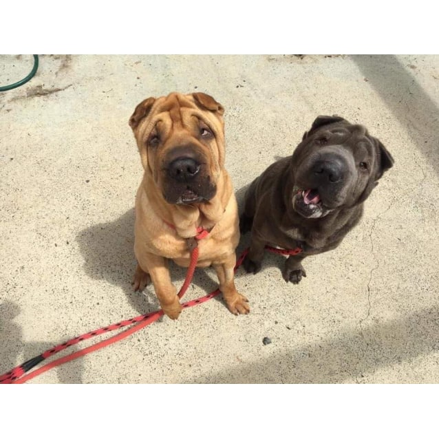 Photo of Penny And Pablo