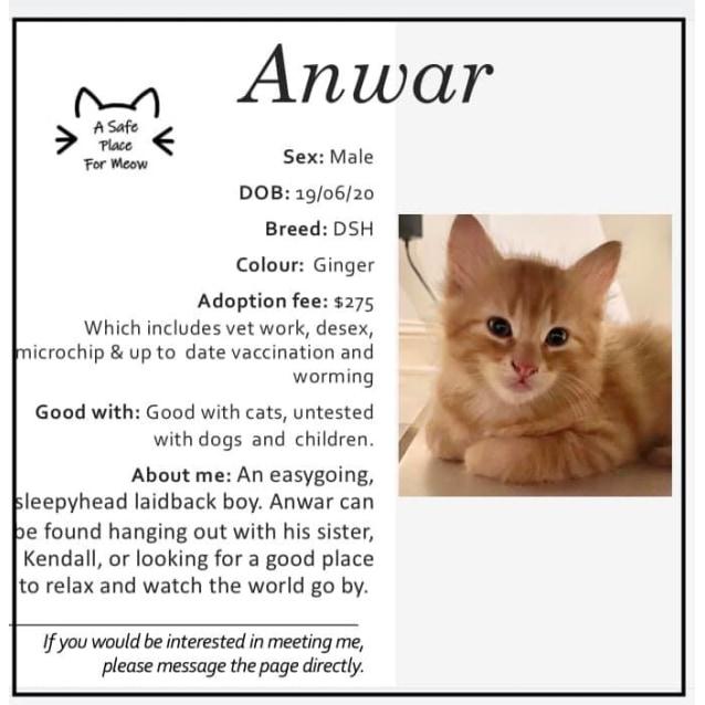 Photo of Anwar