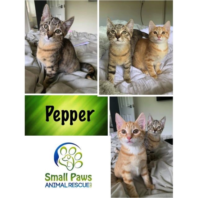 Photo of Pepper