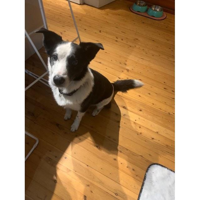 Photo of Ringo