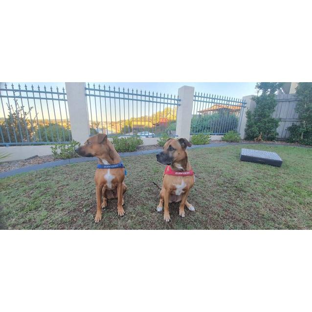 Photo of Hazel & Bentley