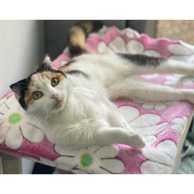 Photo of Rosebud