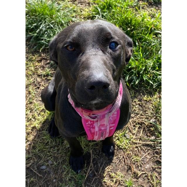 Photo of Chloe (21kg)