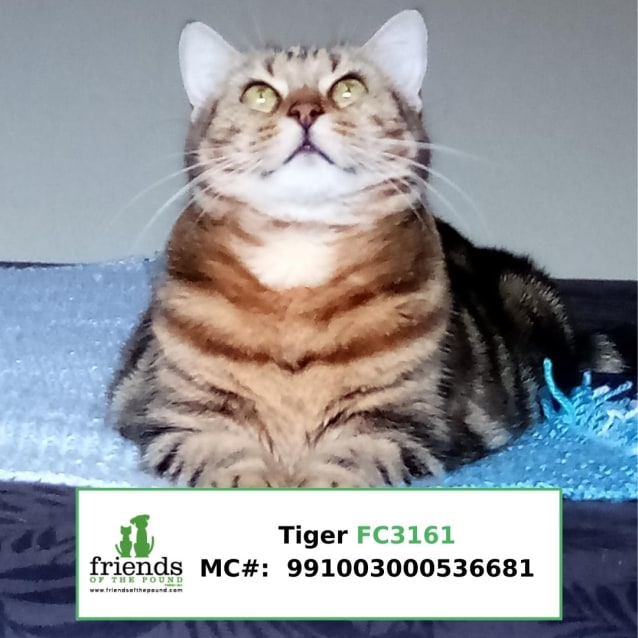 Photo of Tiger #2