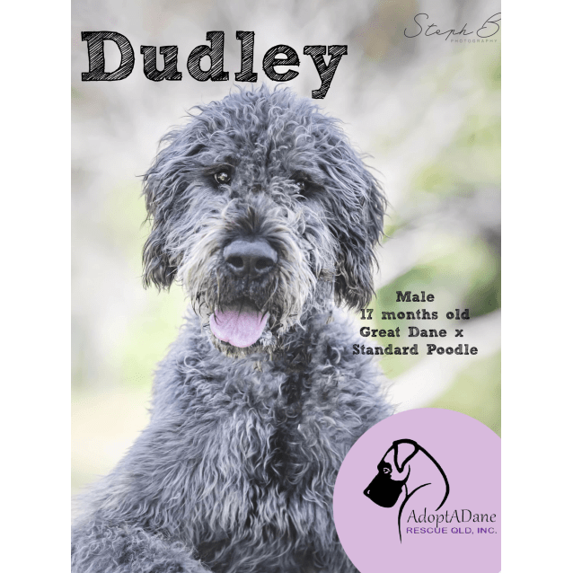 Photo of Dudley