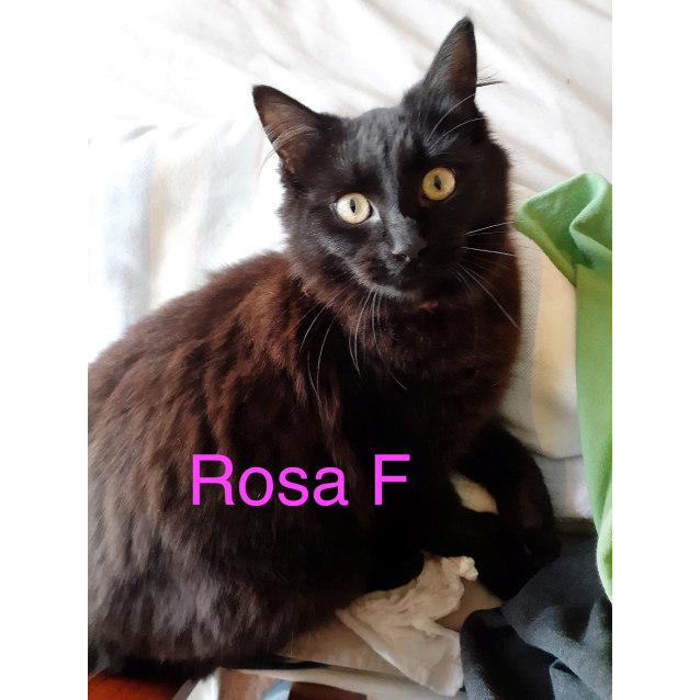 Photo of Rosa