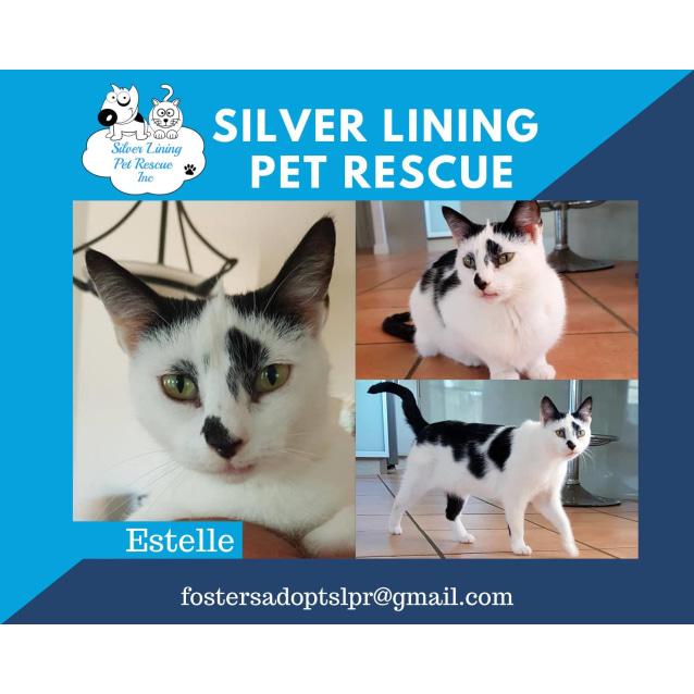 Photo of Estelle