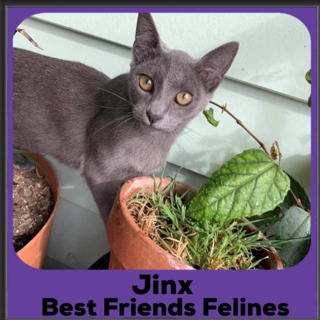 Photo of Jinx