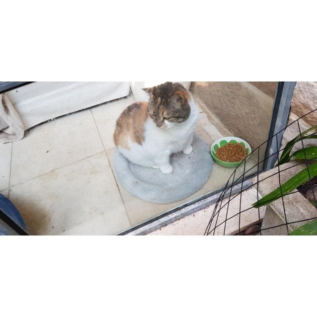 Photo of Miss Kitty