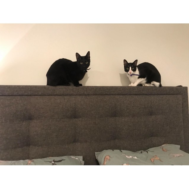 Photo of Salem & Sabrina