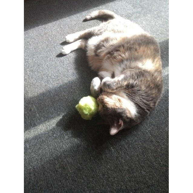 Photo of Sweet Lilla