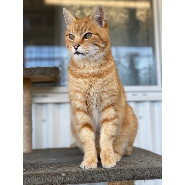 Photo of Arthur