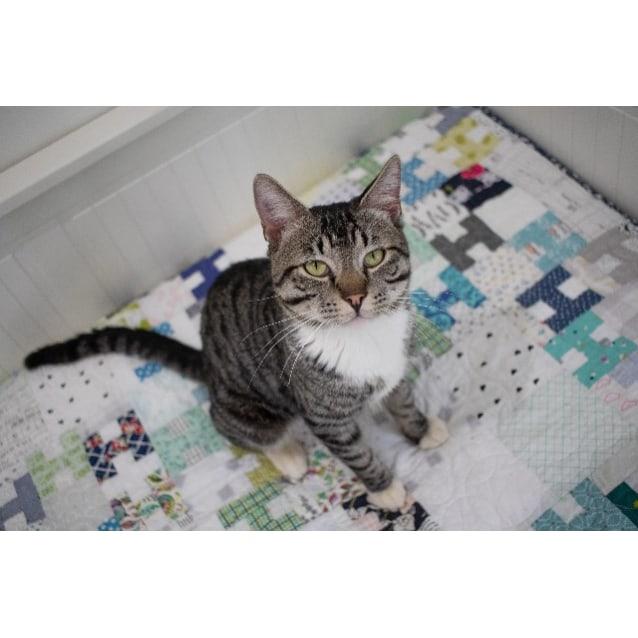 Photo of Sparksie