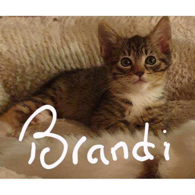 Photo of  Beautiful Brandi