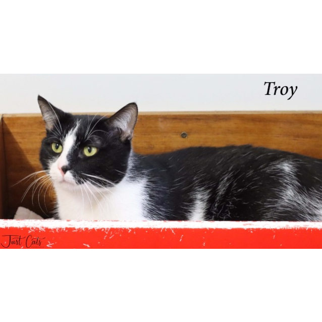 Photo of Troy