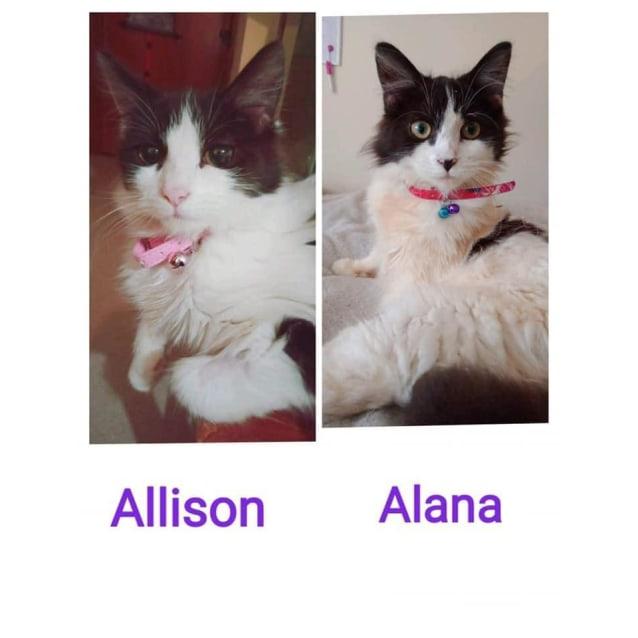 Photo of Alana & Allison