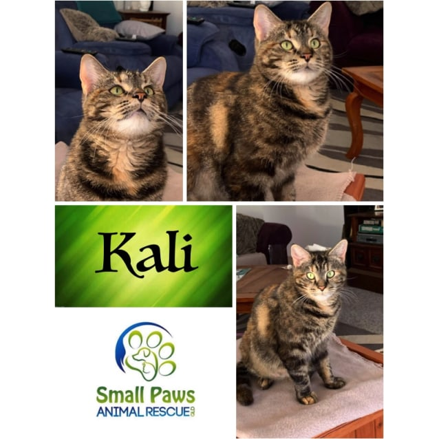 Photo of Kali