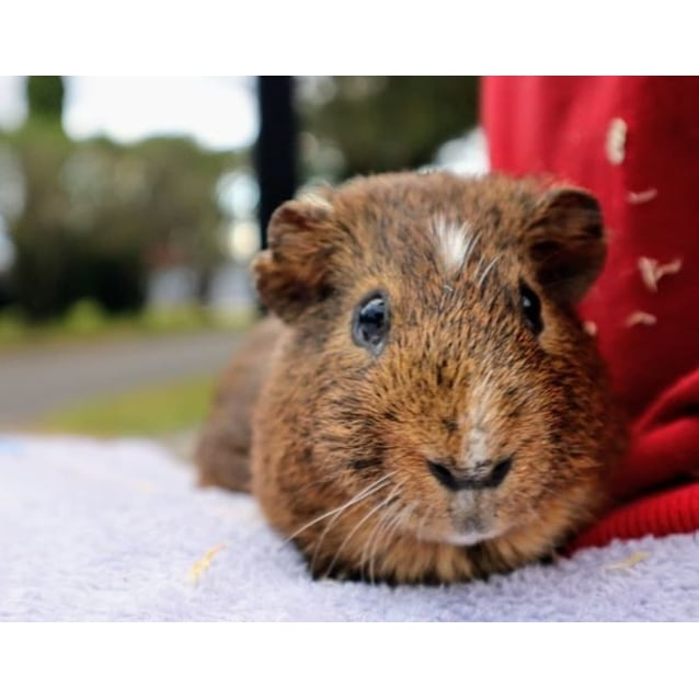 Photo of Pickle