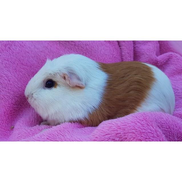 Photo of Petal