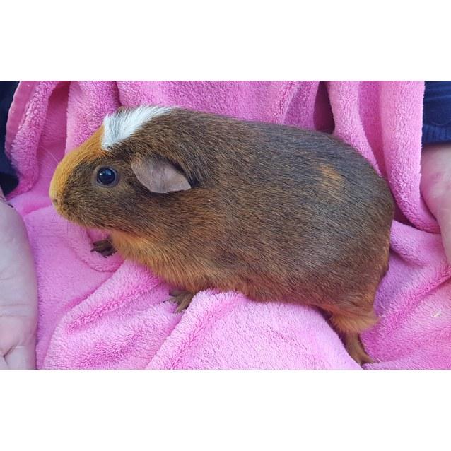 Photo of Florette