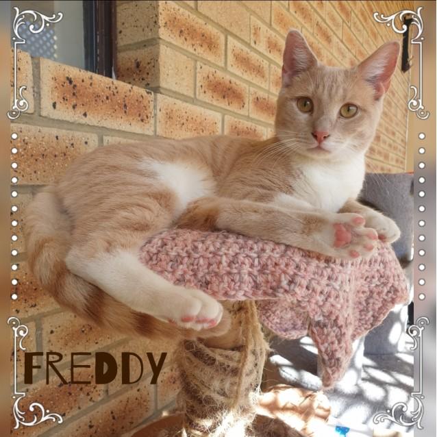 Photo of Freddy