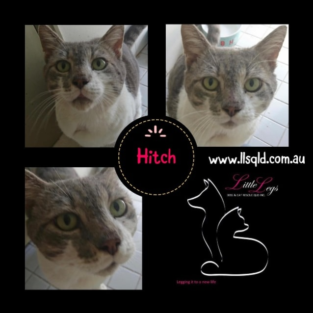 Photo of Hitch