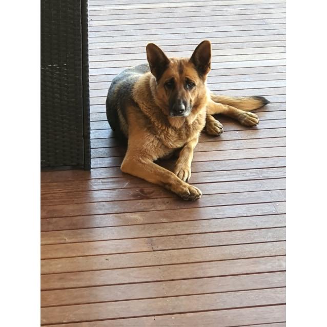 Photo of Sheba