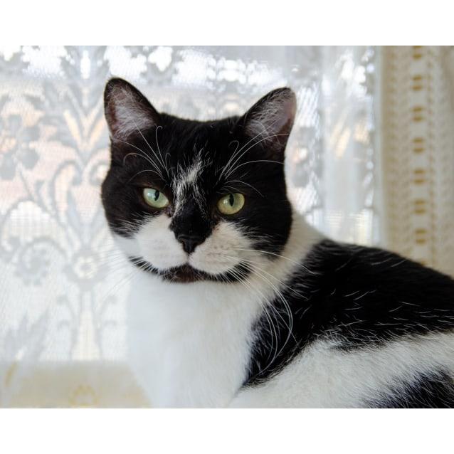 Photo of Taffie