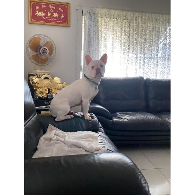 Photo of Porky