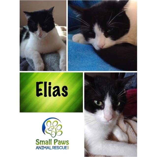 Photo of Elias