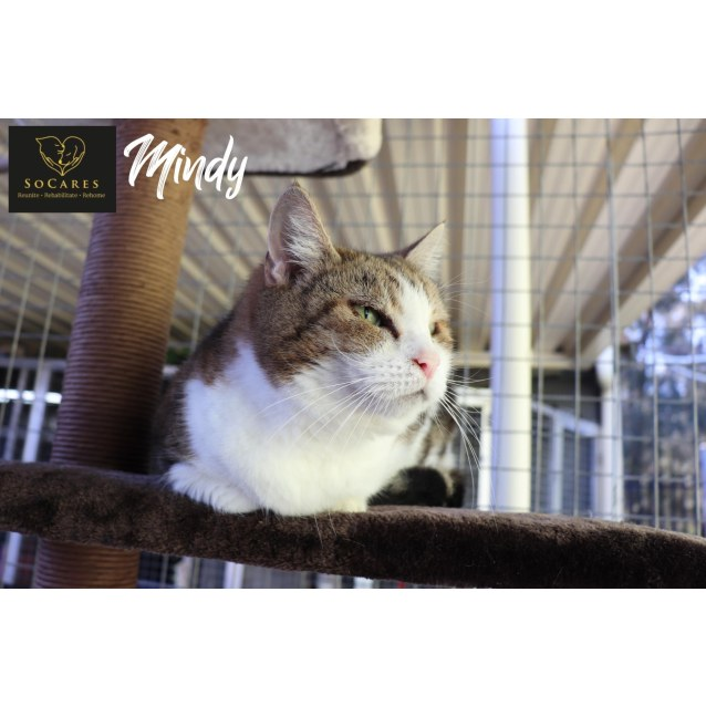 Photo of Mindy