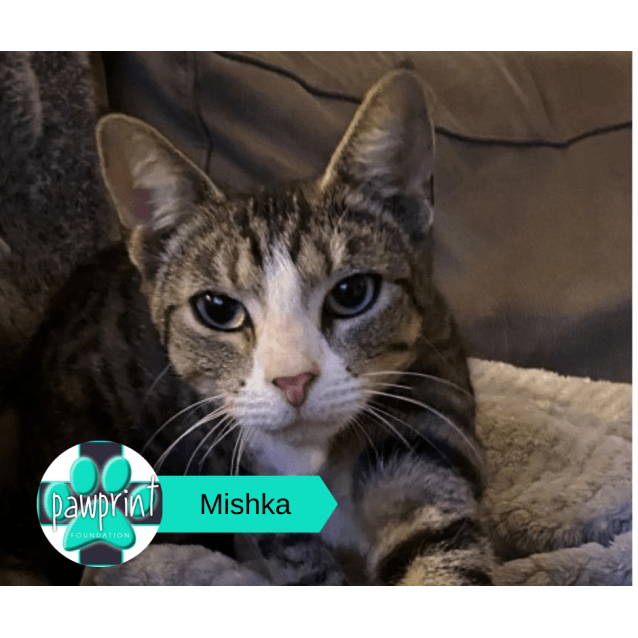Photo of Mishka