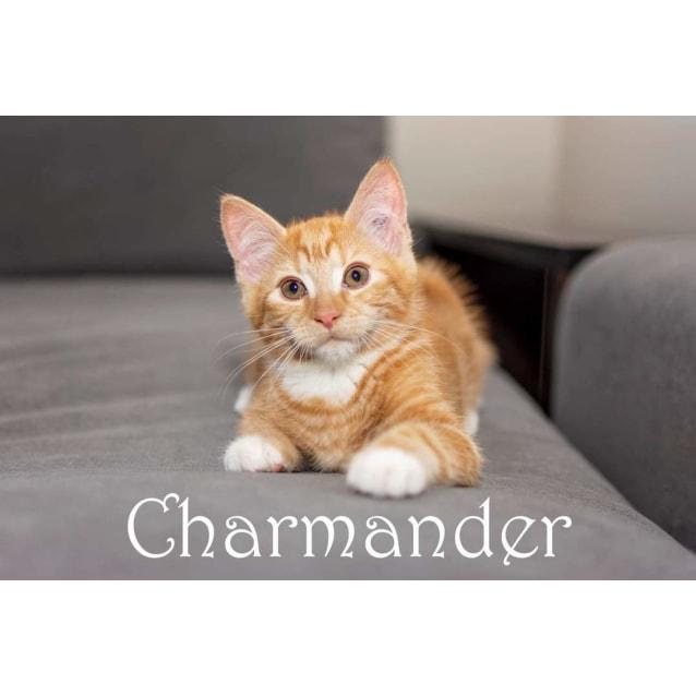 Photo of Charmander
