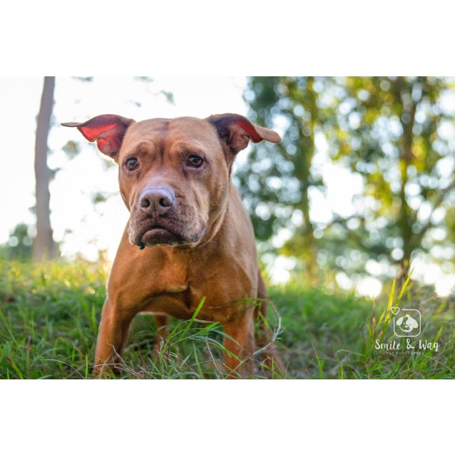 Photo of Sampson (Sammy)
