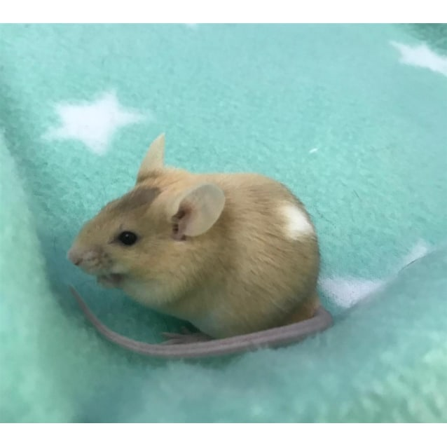 Photo of Petunia