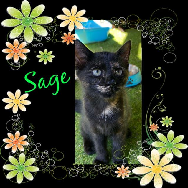 Photo of Sage