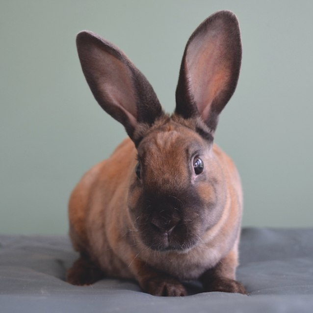 Photo of Snickers