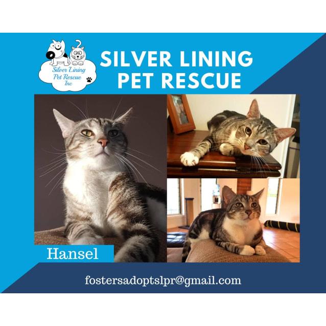 Photo of Hansel