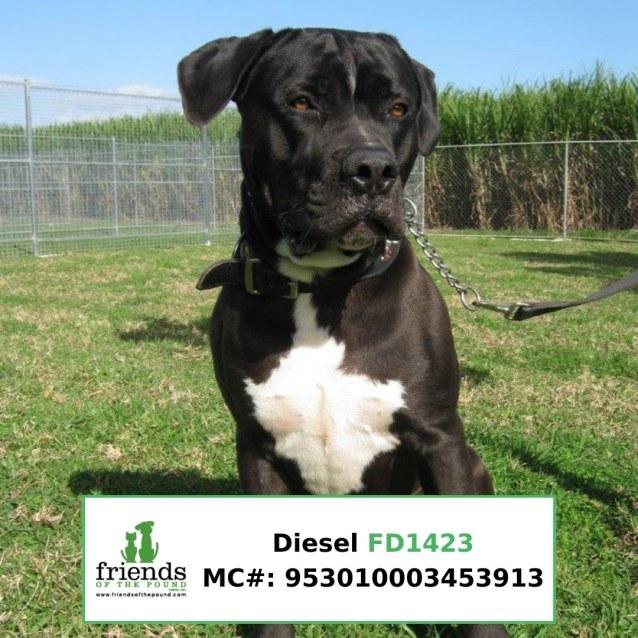 Photo of Diesel