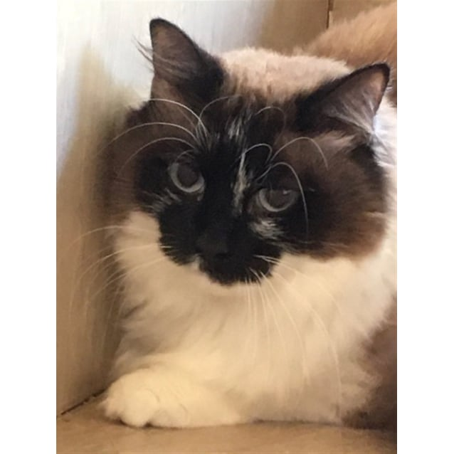 Photo of Little Puss